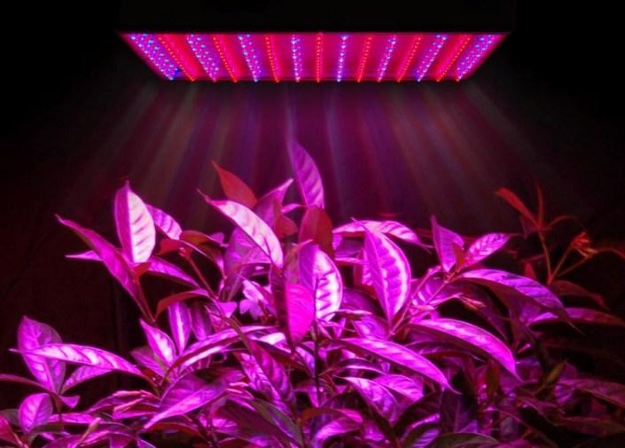 Светодиодные LED лампы для растений (Фитолампы)
