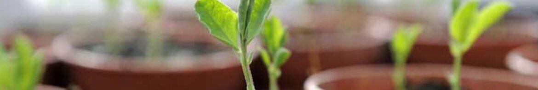 Какой должен быть идеальный грунт для растений